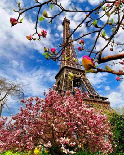 5 روز فرانسه