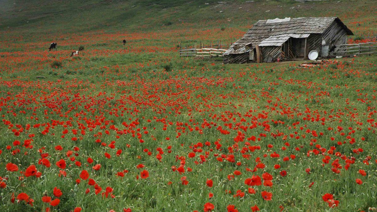 طبیعت ایران؛ بهشت طبیعتگردی