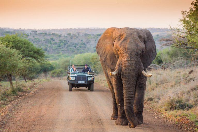 پارک ملی کروگر - جاذبههای آفریقای جنوبی