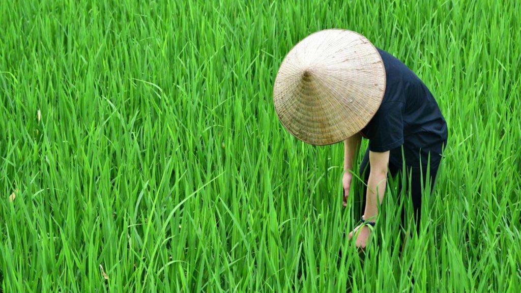 کلاه مخروطی ویتنامی