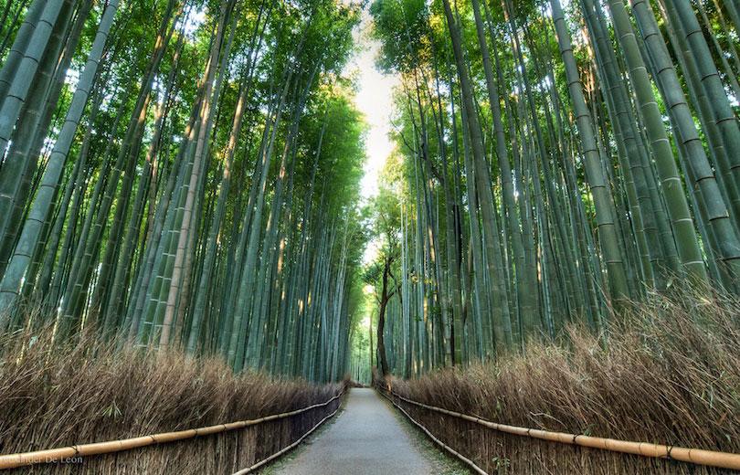 جنگل بامبوی آراشییاما