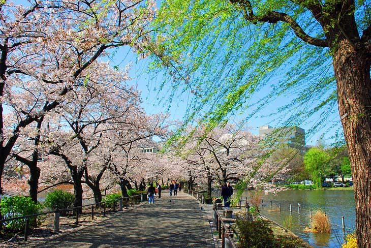 پارک اوئنو و باغ وحش توکیو