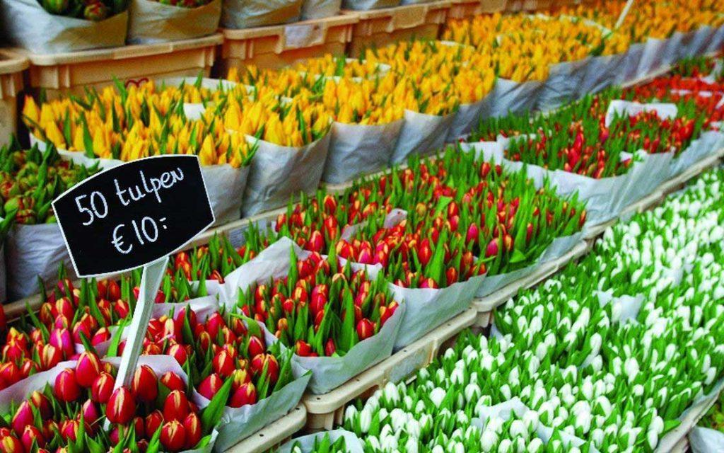بازار گل - تفریحات رایگان آمستردام