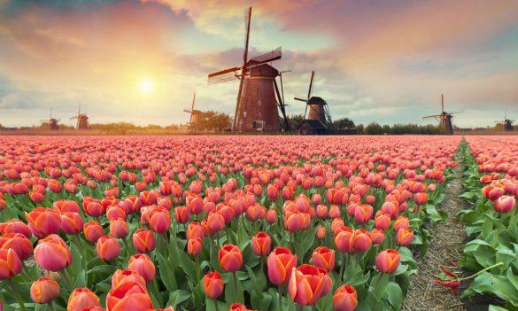 راهنمای کامل آب و هوای هلند + بهترین زمان برای سفر