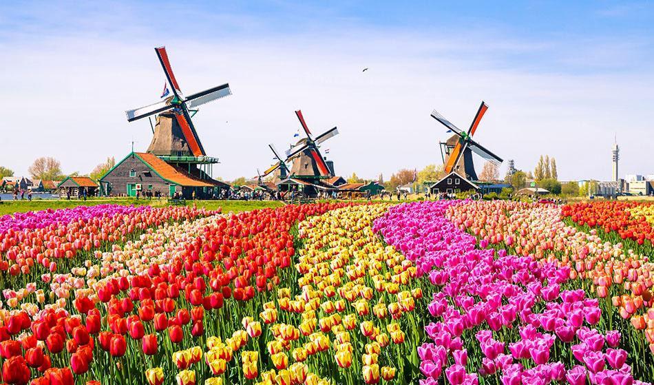 فرهنگ و آداب و رسوم هلند را بشناسید