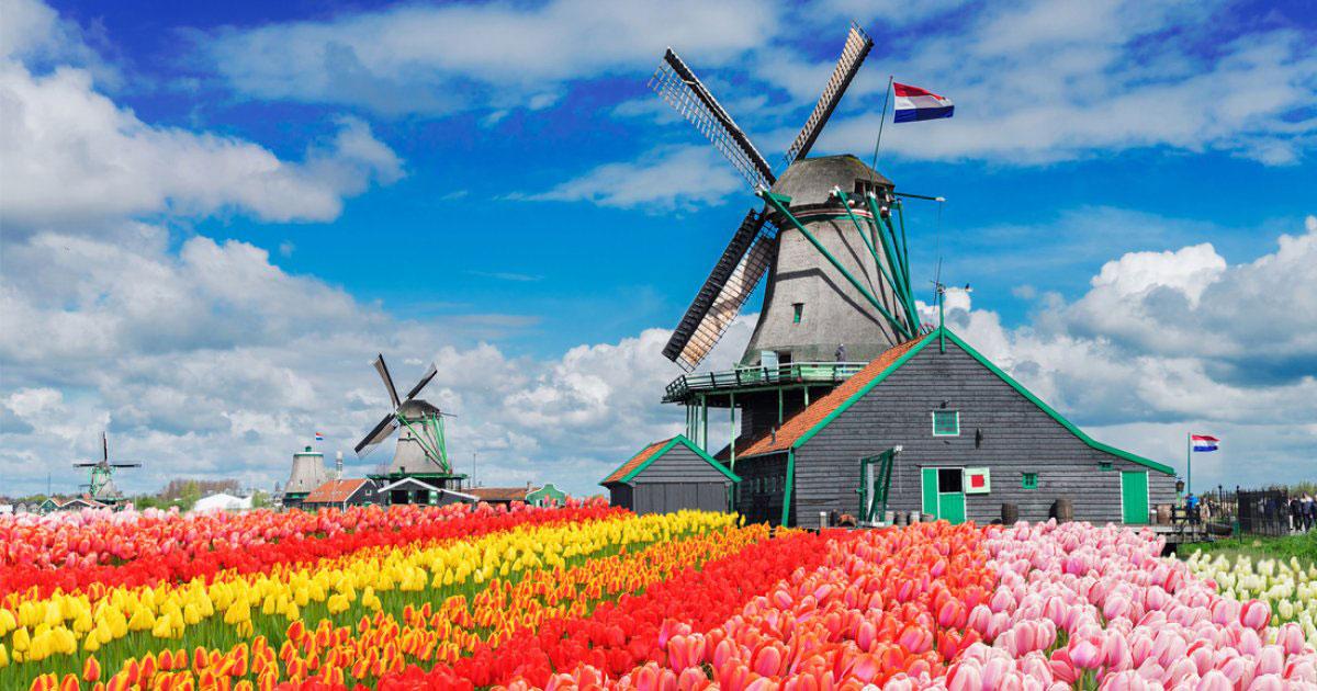 همه چیز را درباره آسیابهای بادی هلند بدانید