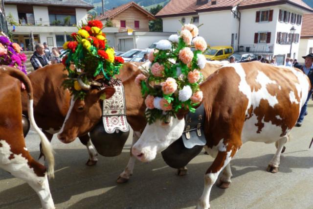 جشنها و فستیوالهای متعدد