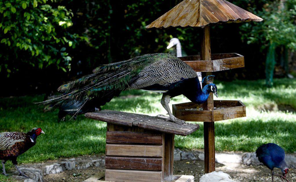 باغ پرندگان - جاهای دیدنی اصفهان در پاییز