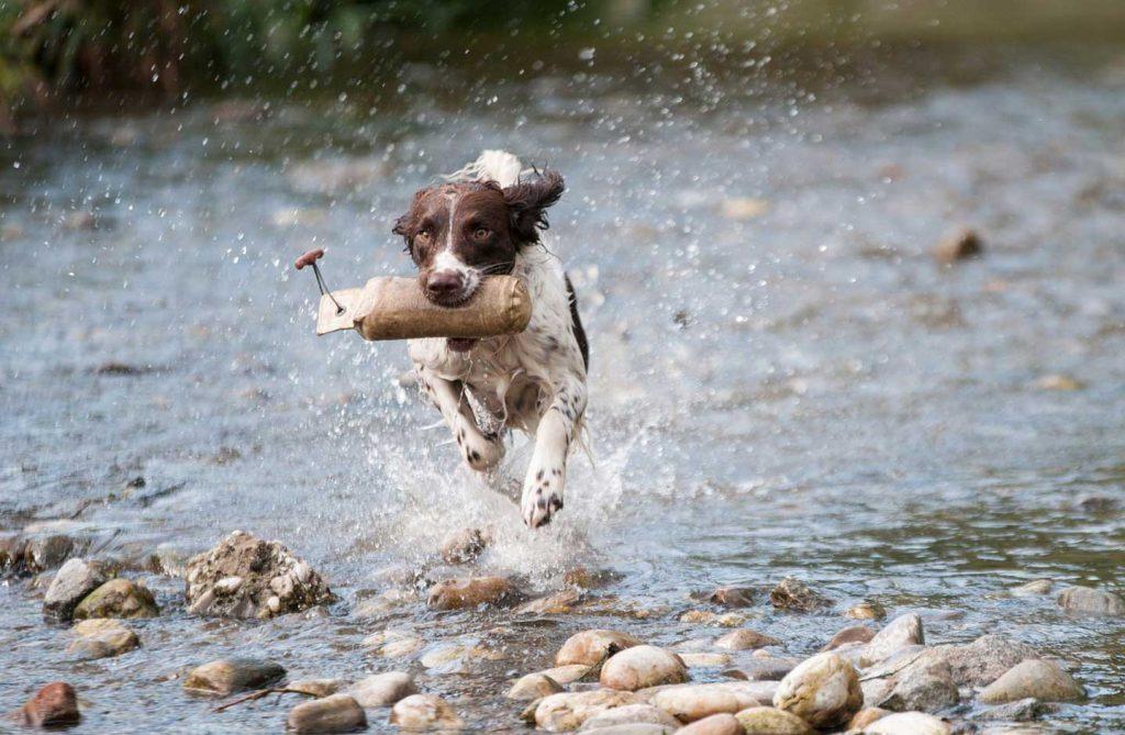 مالیات برای سگها
